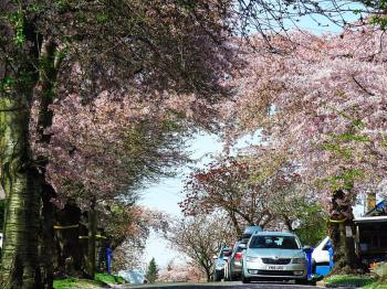 """Blossom Abbeydale Park Rise"