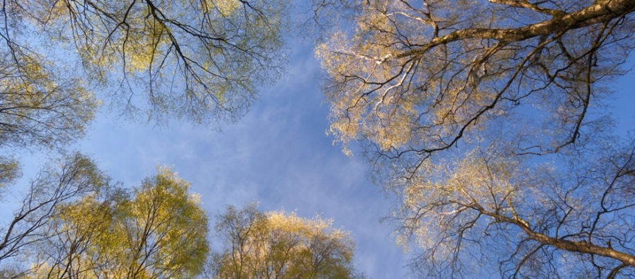 Silver birch, Stanton Moor - Fran Halsall