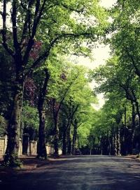 """Tree lined avenue"