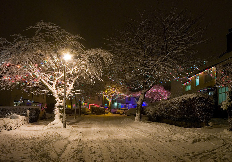 u201cChristmas lights Abbeydale Park Rise & Notable trees | STAG - Sheffield Tree Action Groups azcodes.com