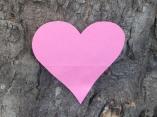 Tree heart - Fran Halsall