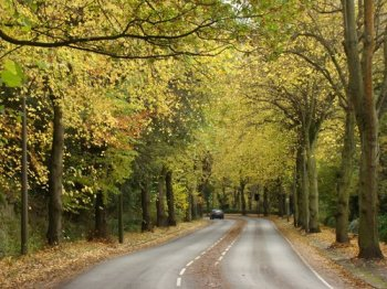 """Rivelin Valley Road lime avenue"
